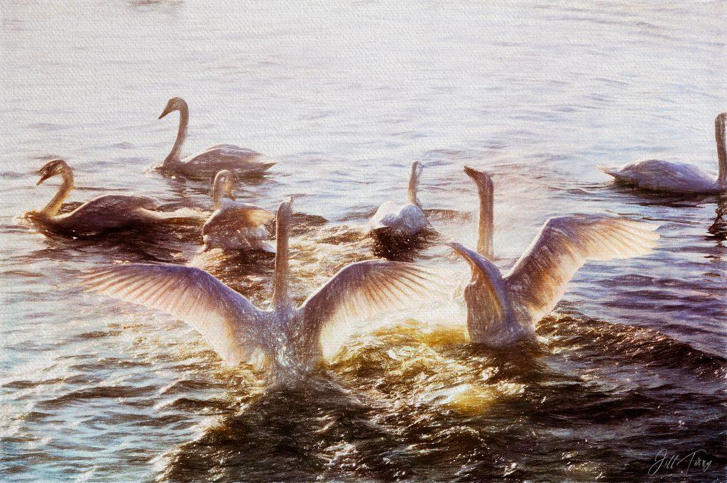 Swan Lake - Painting of Swans